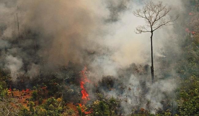 Brasil chamas rua te chama governo bolsonaro meio ambiente manifestações