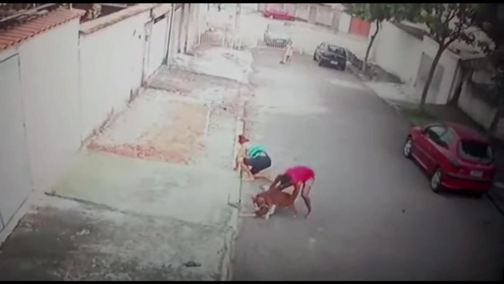 homem ataque pitbull criança