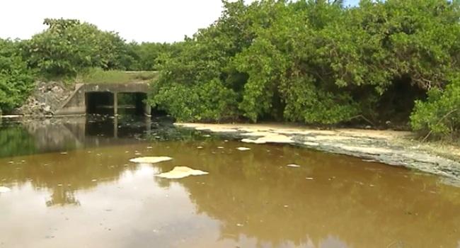 Paraibanos contam com mais um canal para denúncia ambiental