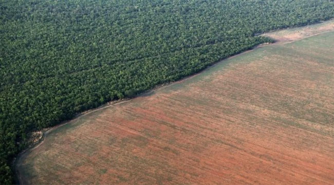 desmatamento amazônia bolsonaro indígena