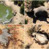 elefantes-mortos-botsuana