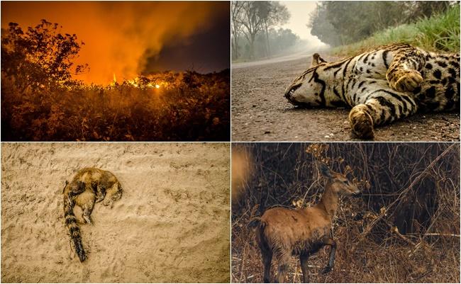 fogo chamas pantanal