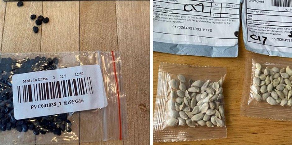 sementes da china