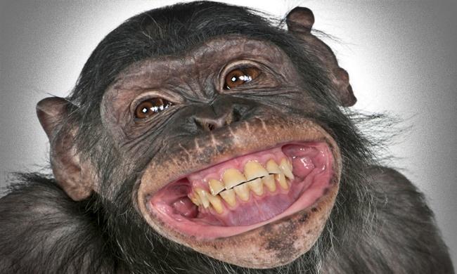 Habeas corpus para o macaco contribuição historicidade do direito moderno