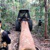 juiz-multa-policiais-atuaram-acao-contra-desmatamento