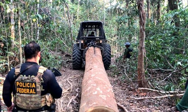 Juiz multa policiais atuaram ação contra desmatamento