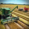 agrotoxico-arroz-toxinas-acima-permitido-saude