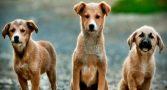 pesquisa-cachorros-inimigos-planeta-provoca-polemica