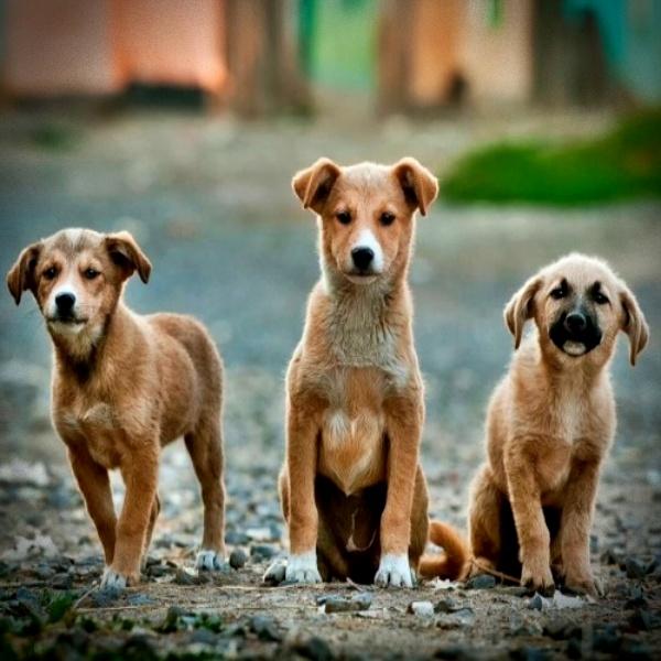 Pesquisa cachorros inimigos do planeta provoca polêmica