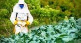 agrotoxicos-aumentar-vulnerabilidade-covid-relatorio