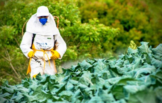 Agrotóxicos aumentar vulnerabilidade Covid relatório imunidade baixa obesidade