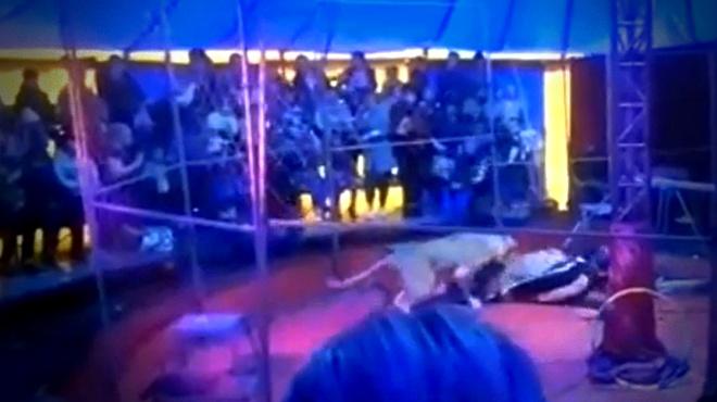 Leão ataca treinador durante apresentação de circo na Rússia