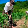 desafios-nova-geracao-politicas-agricultura-familiar