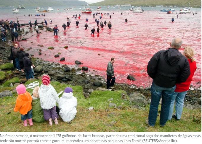 matança golfinhos